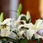 Weiße Lilien im Foyer