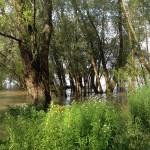 Rheinauen in Köln-Rodenkirchen